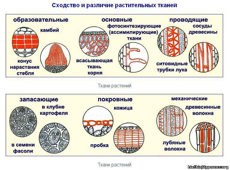биология виды растений для